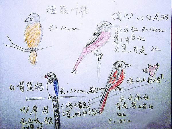 六年级小鸟画画图片