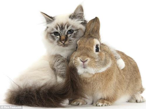 壁纸 动物 猫 猫咪 小猫 桌面 500_374