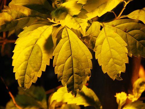 IXUS 1100 HS有多种色彩模式,还可以自定义设定画面色彩的效果,让我可以更随心所欲地拍摄,或突出春天的翠绿,或突出秋天的黄色。