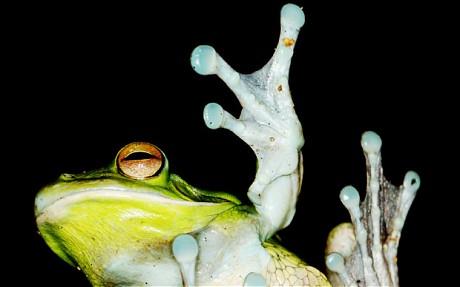 药剂师们近日在青蛙和蟾蜍皮肤中发现可遏制肿瘤扩散、最终可能导