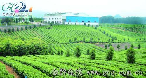 贵州又有5家茶企跻身于国家级龙头企业行列,至此,贵州已有8家茶叶企业图片