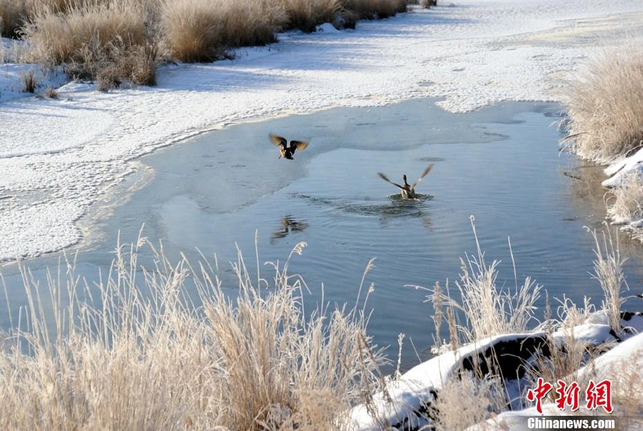五大连池风景区冬季温泊攻略如画(组图)成都色达美景自驾环线图片