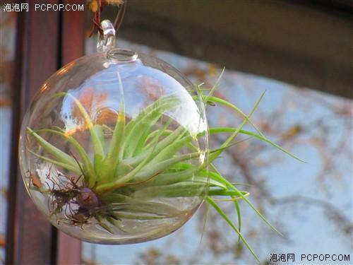 8倍光学变焦轻松拍摄屋檐下的景观植物