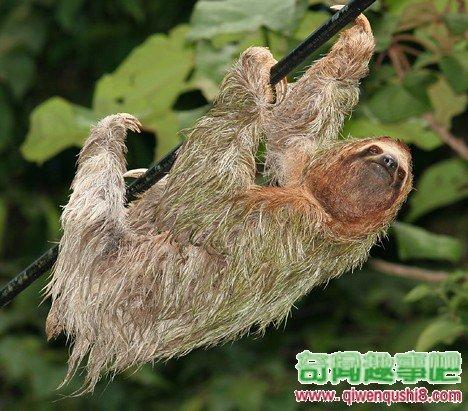 10种奇怪的绿色动物(组图)