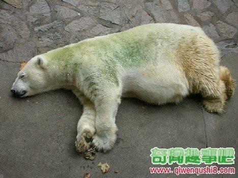 绿色北极熊长颈鹿怎么英语读图片