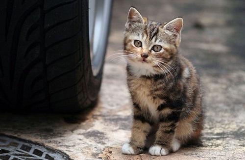 (在此表扬裴先生对小动物的保护,也呼吁大家爱护小动物)     冬天到了