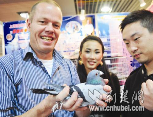 武汉首届信鸽展在武展开幕 云集世界各地名贵鸽种