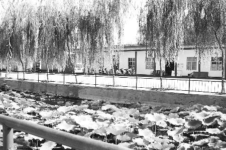 村中广场荷花池