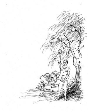 大树主干手绘图