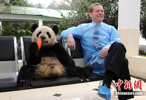 """大熊猫""""阳光""""""""甜甜""""启程赴英国定居十年"""