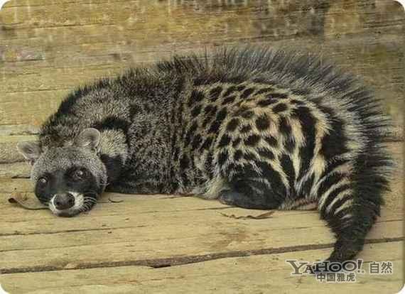 大开眼界:最古怪最稀有的动物(组图)