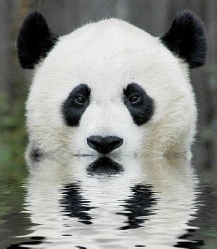 赵红霞照雅照片原�_熊猫囧照:让您开心一笑(组图)