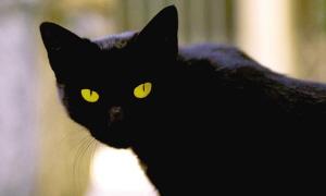 这只黑色的小猫继承了主人1000万欧元的遗产。《中国日报》供图