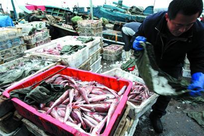 青岛海鲜市场需求大 渔船无奈南下收鱼(组图)
