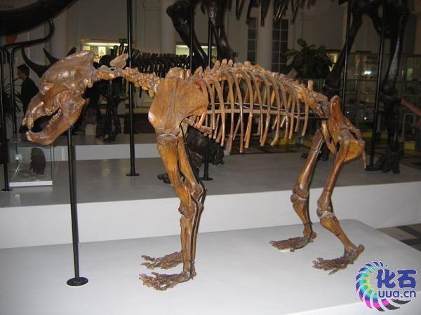 史前灭绝的小型动物