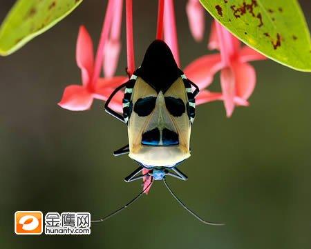 一种昆虫,名字不详. -盘点十大长着人脸的动物