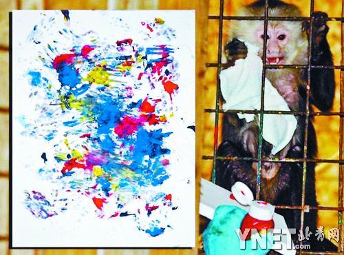 加拿大猴子画家波基茨和它的抽象派画作