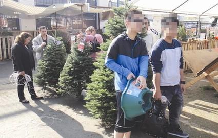 圣诞在即,洛杉矶华人为装饰圣诞树采购忙。美国《侨报》