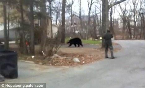 美国新泽西州一头黑熊竟然跑到一房屋地窖里冬眠。