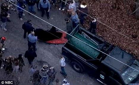 这头黑熊已经被当地野生动物保护机构收押。