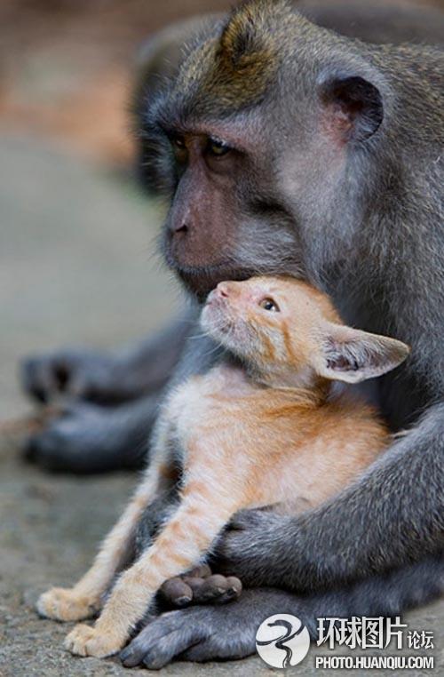 刚出生的北极熊宝宝_北极熊宝宝撒娇瞬间(组图)-搜狐母婴