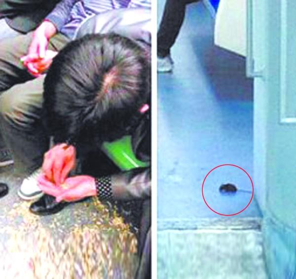 女孩肚子里有老鼠; 上海1号线列车里老鼠窜入乘客