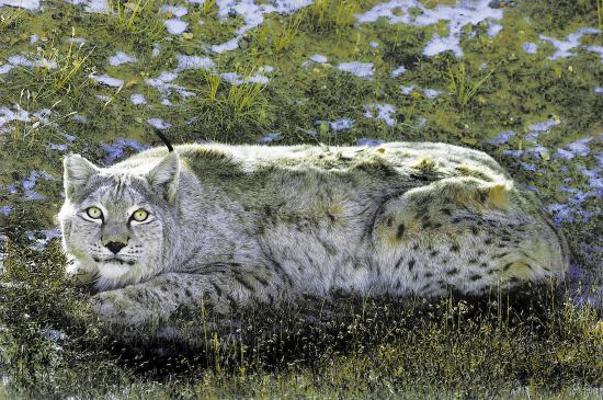 用镜头追踪野生动物(组图)