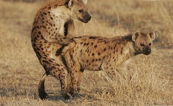 野生动物的私生活照    <h1>私生活_私生活混乱 -</h1>  生动物的私生活照(组图)-搜狐滚动