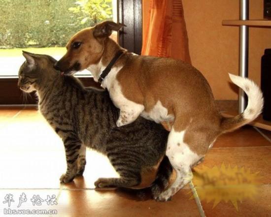 国外人和动物杂交影片网站_同异类杂交的动物(组图)