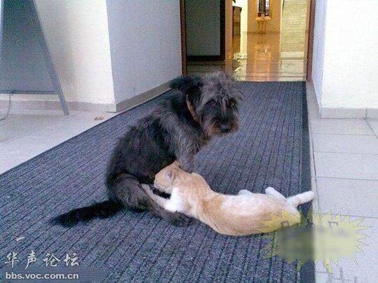 小色狗和猫交配_惊!同异类杂交的动物(组图)-搜狐滚动