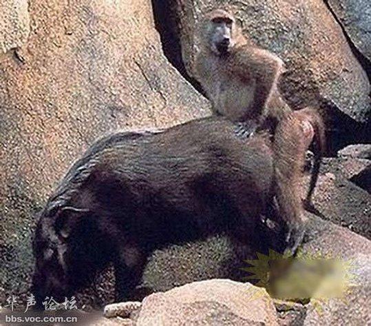 惊!同异类杂交的动物(组图)-搜狐滚动