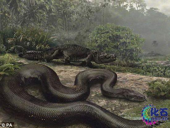 一百英尺长巨蛇或出没婆罗洲 1龙头7鼻孔地狱怪物(组图)
