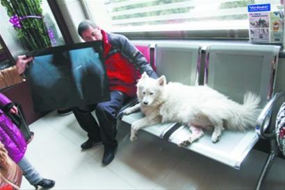 开车撞到狗怎么办,保险理赔吗 皮卡中国