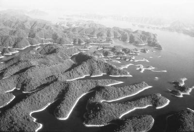 千岛湖近景 资料图片   我们为水污染已经付出了沉重的代价.