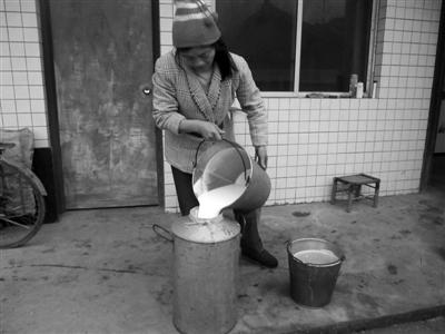 四川/12月28日,四川洪雅县阳坪村,一名奶农将攒了两天的奶倒入奶瓶...