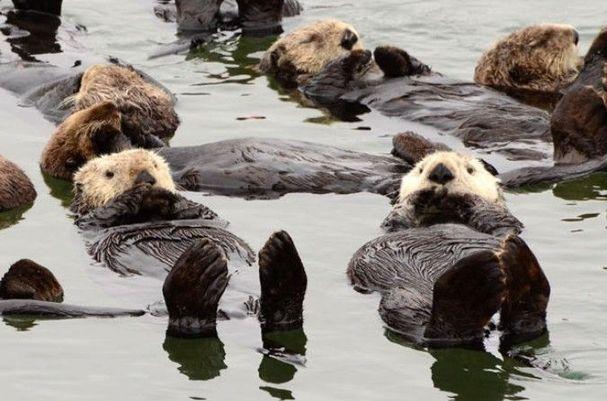 2011年最萌动物图片盘点