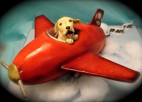 想带宠物坐飞机,怎么办?