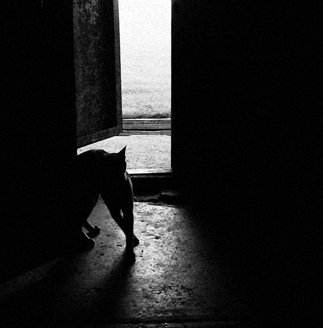 猫咪是很多摄影师的宠儿.图片
