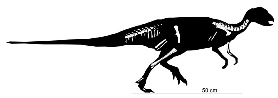 吉兰泰龙属_浙江发现一新的恐龙——天台越龙(图)-搜狐滚动