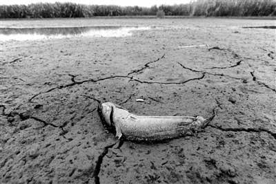 鄱阳湖近日水位上涨江西政府整治非法捕捞填湖