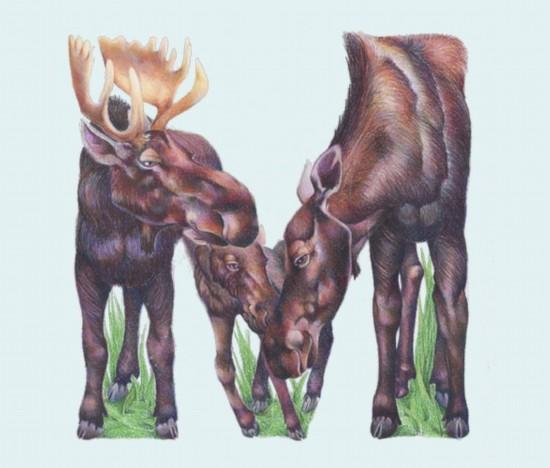 艺术家天才创意:动物英文字母(组图)