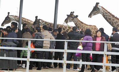 寮步香市动物园