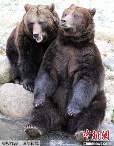 冬眠动物 冬眠动物简笔画 冬眠的动物图片大全 动物的冬眠绘画 黑马素图片