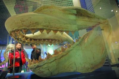 大连自然博物馆中的恐龙化石