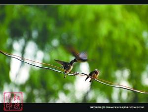 爱鸟护鸟拍鸟观鸟鸟友们的幸福(组图)-搜狐滚