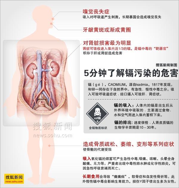 镉污染危害示意图。 搜狐新闻 制图