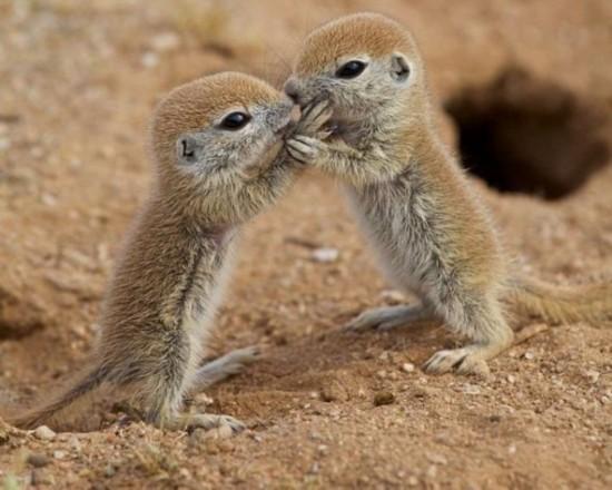 可爱地松鼠幼仔首次离开洞穴嬉戏打闹(组图)