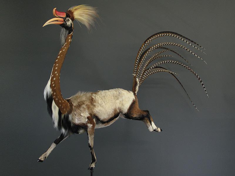 """美国残忍艺术家将动物肢体拼接成""""雕塑"""""""