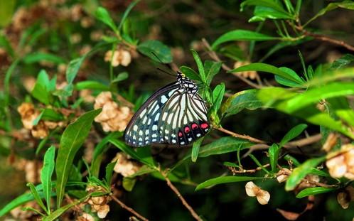 行走在植物园中,已是春意盎然,信手沾花惹草,与大家共享,美好生活。