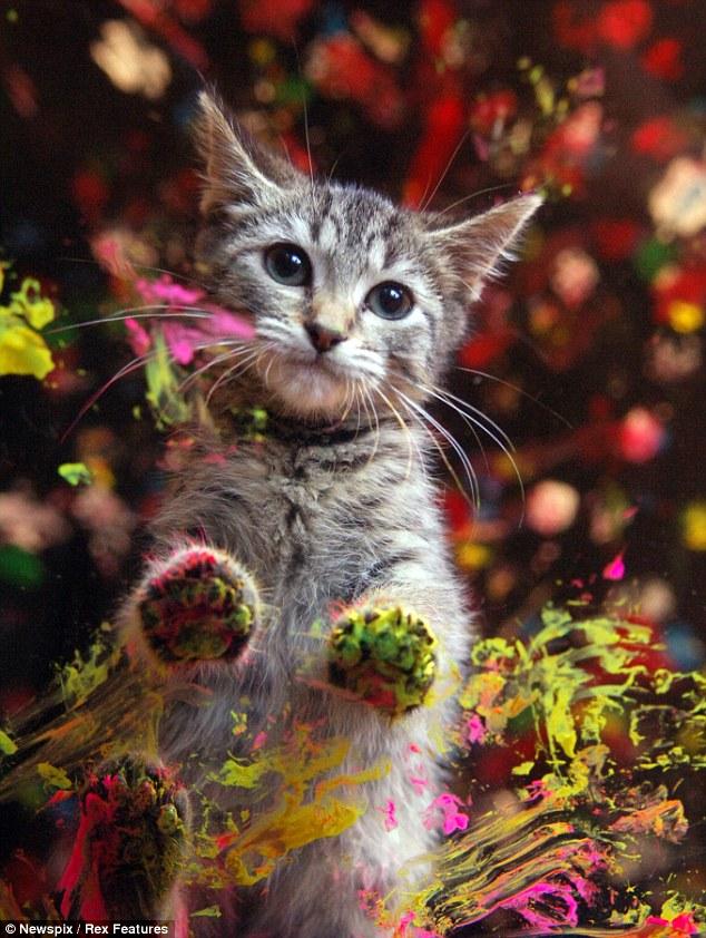 高清:澳大利亚小猫用爪子画出抽象画(组图)